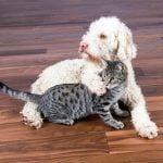 שוברים מיתוס: פרקט בדירה עם בעלי חיים