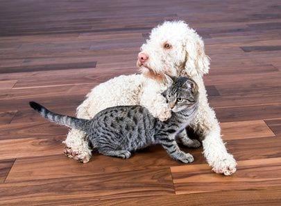 כלב וחתול על פרקט בדירה